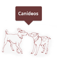 canideos
